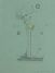 Buborék IV., tollrajz, akvarell, 16×11,3cm